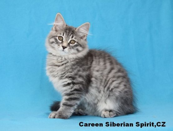 Careen Siberian Spirit