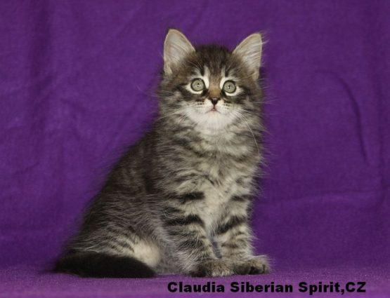 Claudia Siberian Spirit