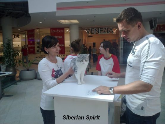 ORIONA Siberian Spirit, CZ