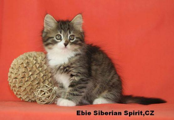 Ebie Siberian Spirit CZ
