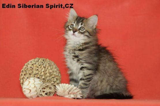 Ein Siberian Spirit CZ