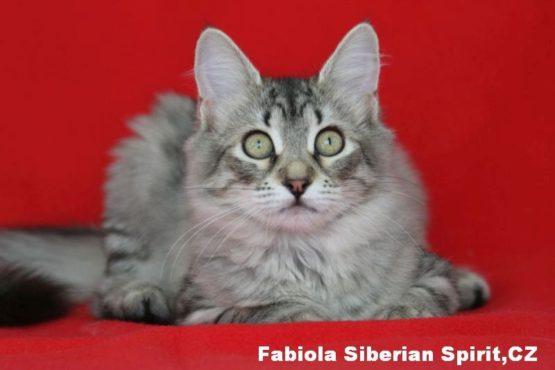 Fabiola Siberian Spirit CZ