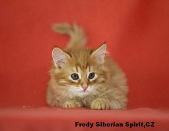 Fredy Siberian Spirit CZ