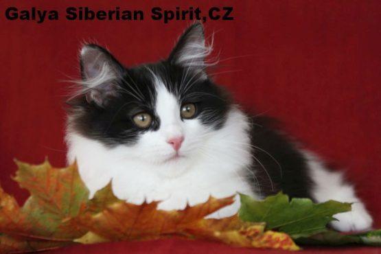 Galya Siberian Spirit
