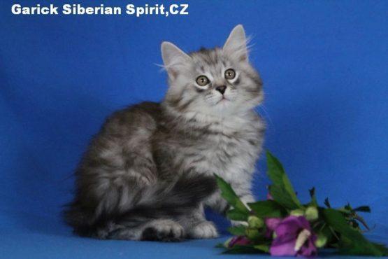 Garick Siberian Spirit CZ